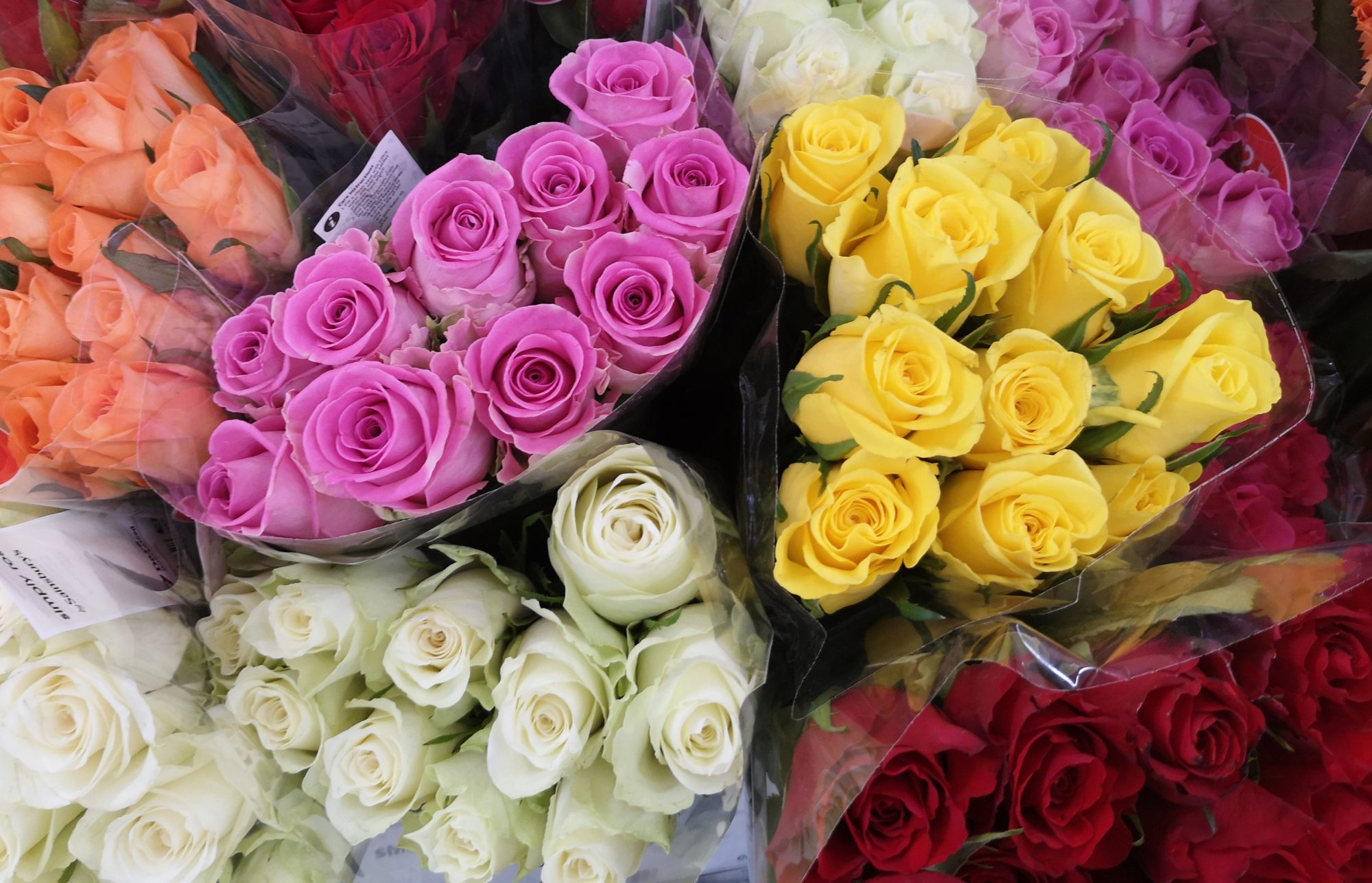 Different Colour Roses and Best Occasions to Gift Them